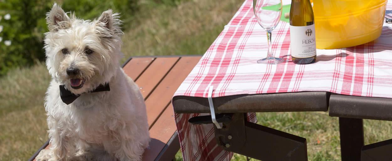 pet-friendly-leavenworth wa lodging